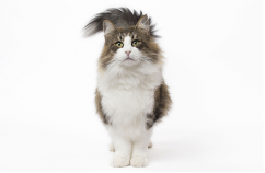 Nutrición para gatos mayores 2
